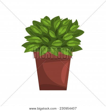 Philodendron Indoor House Plant In Brown Pot, Element For Decoration Home Interior Vector Illustrati