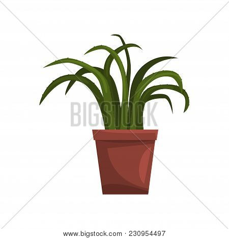 Aloe Indoor House Plant In Brown Pot, Element For Decoration Home Interior Vector Illustration Isola