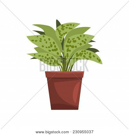 Dieffenbachia Indoor House Plant In Brown Pot, Element For Decoration Home Interior Vector Illustrat