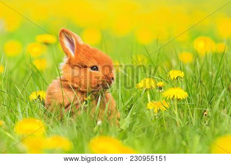 Cute Red Rabbit Sits Among The Yellow Flowers, Baby Animals, Pets