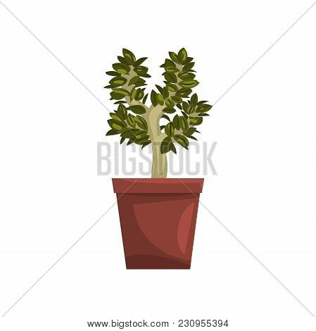 Bonsai Tree Indoor House Plant In Brown Pot, Element For Decoration Home Interior Vector Illustratio