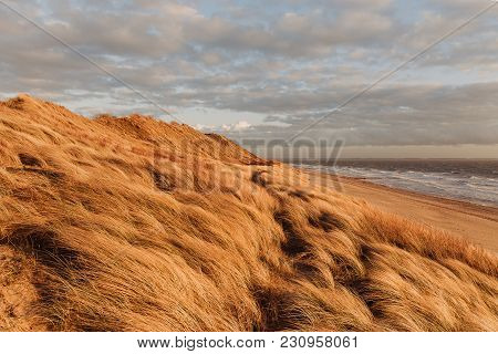 Grass Dune On The Beach At Sunset With A View Of The North Sea