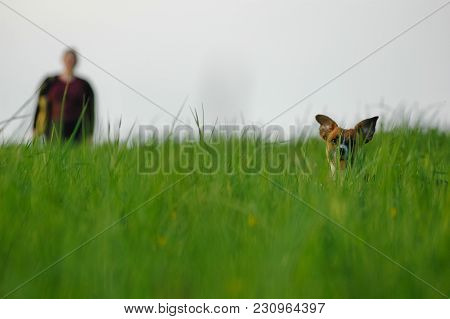 Doggie In A Grass Field And A Female Person In The Background