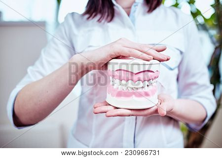 Smiling Doctor Dentist With Dental Layout Holds In Hands