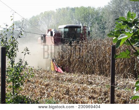 Combine Harvesting Corn Crop In The Cultivated Field