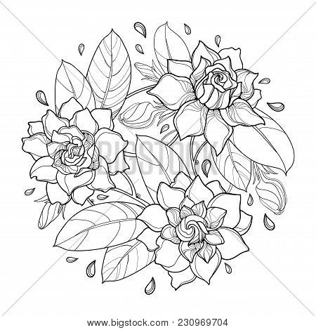 Vector Round Bouquet With Outline Gardenia Flower, Bud And Ornate Leaf In Black Isolated On White Ba