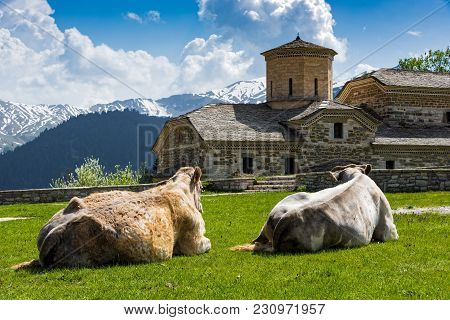 Old Stone Church And Two Cows Laying On The Grass Outside The Pirra Village On Pindus Mountains In T