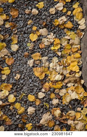 Texture Background Of Autumn Season With Leaves