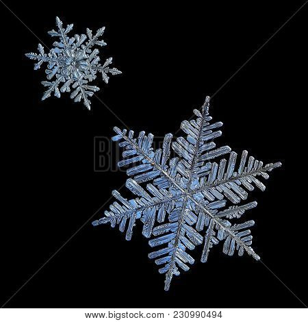 Two Snowflakes Isolated On Black Background. Macro Photo Of Real Snow Crystals: Large Stellar Dendri