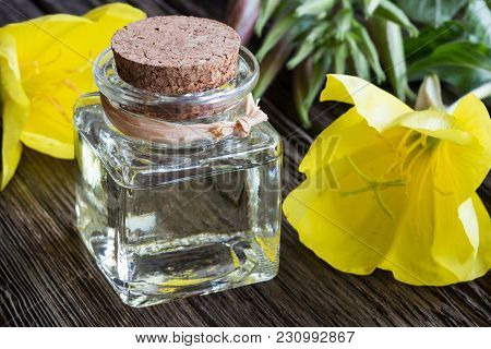 A Bottle Of Evening Primrose Oil With Yellow Evening Primrose Flowers