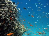 A picture of a coral reef. shot in the Red Sea poster