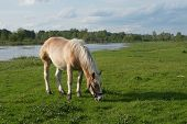 Horse grazing on a beautiful meadow. Rural scene. poster