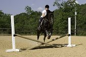 Pre-teen girl riding a horse in mid-jump over an obstacle poster