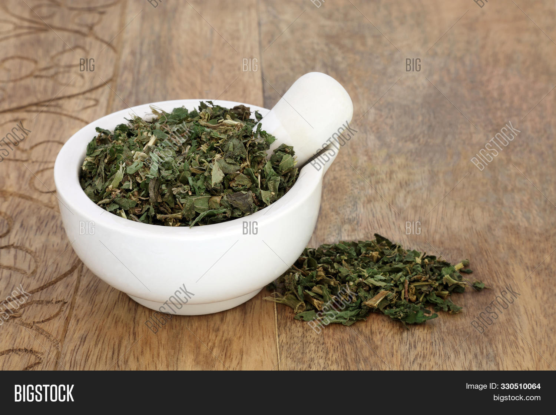 Pellitory Wall Herb Image Photo Free Trial Bigstock