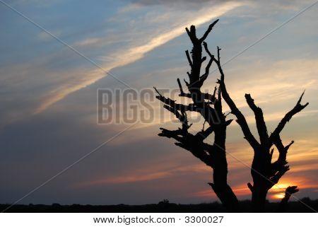Black Tree Sunset