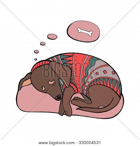 Vector Sleeping Dachshund Dog. Dachshund Dog In Sweater. Printing