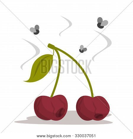 Rotten Cherry Vector Isolated. Bad Dirty Food, Damaged Berry