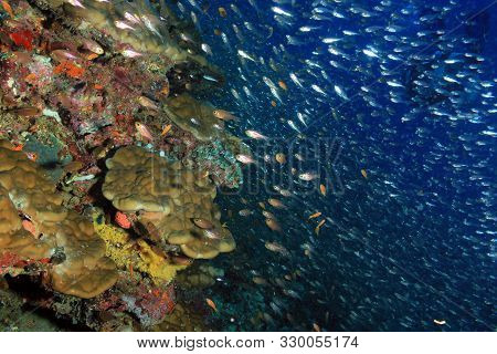Coral Reef Wall And Schooling Fish. South Ari Atoll, Maldives