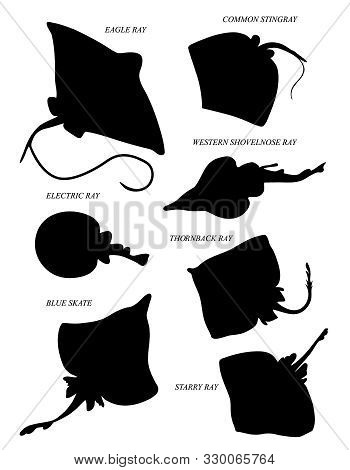 Skates Or Rays. Black Silhouette Vector Illustratuin Collection.