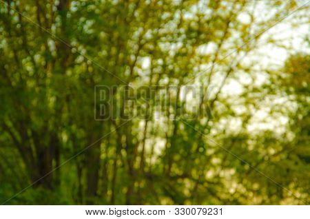 Natural Green Blurred Background, Blurred Green Nature Background