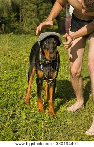 Doberman Puppy Dog On A Background Of Green Bushes
