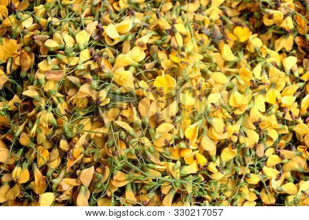 Edible Scented Sesbania Javanica Yellow Flowers Are Sold In The Market And Always Collect A Bees, Ca
