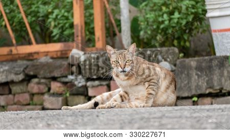 cautiously stray tabby cat at street in a city