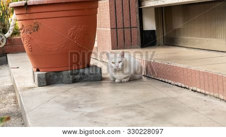 cautiously stray white cat at street in a city