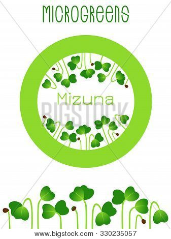 Microgreens Mizuna. Seed Packaging Design, Round Element In The Center. Sprouting Seeds Of A Plant