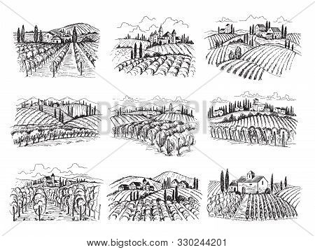 Vineyard Landscape. Farm Grape Fields With Houses Agricultural Hand Drawn Vector Illustrations. Farm