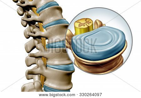 Lumbar Spine Disk Anatomy Segment Medical Concept As A Close Up Of The Human Back Skeleton As A Vert