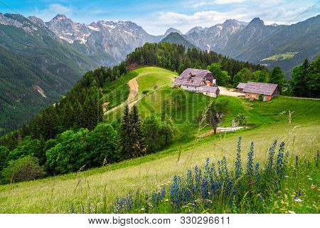Amazing Spring Landscape With Alpine Flowers And Snowy Mountains In Slovenia. Logarska Dolina And Al