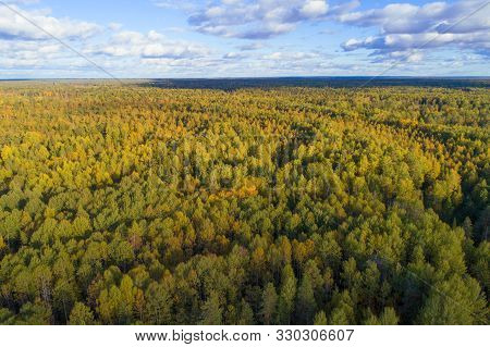 Over The Autumn Forest On A Sunny September Day. Kostroma Region, Russia