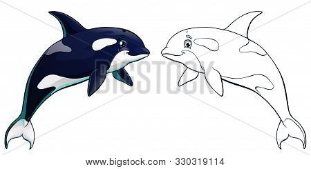 Killer Whale Color And Contour On White