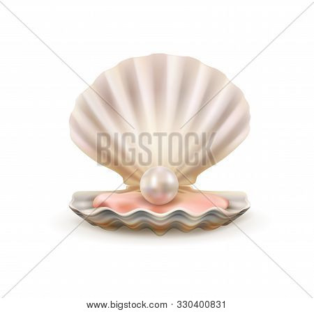Seashell With Pearl Realistic 3d Vector Of Sea And Ocean Treasure Design. Open Shells Of Scallop Mar