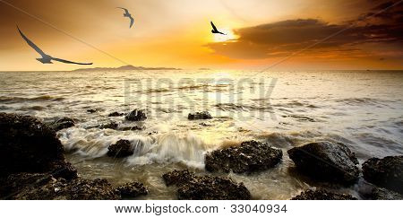 Silhouette Bird With Sunset And Sea