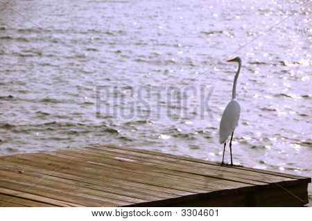 Egret on Florida pier on a sunny day poster