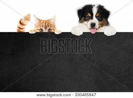 Puppy Dog And Cat Pets Together Showing A Black Placard Isolated On White Background Blank Template