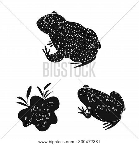 poster of Vector illustration of fauna and reptile symbol. Set of fauna and anuran stock symbol for web.