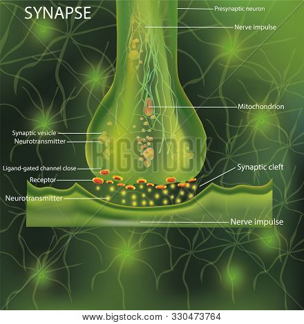 Neurons, Scientific Designation. Structure Synaps. Neuronal With A Nerve Cell. Signaling In The Brai