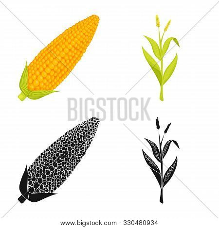 Vector Design Of Cornfield And Vegetable Sign. Set Of Cornfield And Vegetarian Vector Icon For Stock
