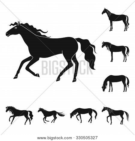 poster of Vector design of fauna and mare icon. Set of fauna and stallion stock symbol for web.