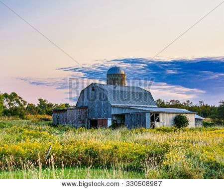 A Barn In Upstate New York, Surrounded By Yellow Flowering Weeds, In The Morning Sun .  The Sky Is C