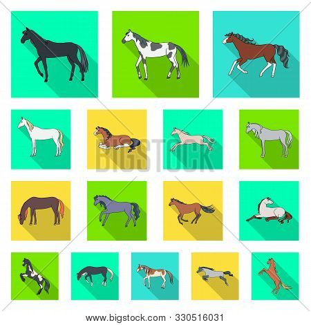 Isolated Object Of Breed And Equestrian Sign. Set Of Breed And Mare Stock Vector Illustration.