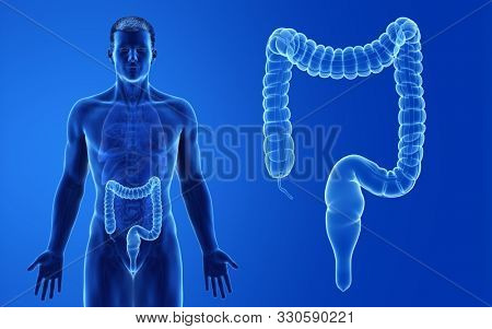 3d rendered medically accurate illustration of the male colon