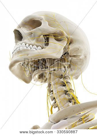 3d rendered medically accurate illustration of the nerves of the head