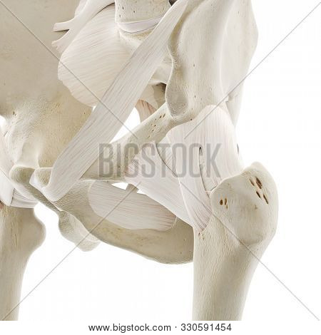3d rendered medically accurate illustration of the ligaments of the hip