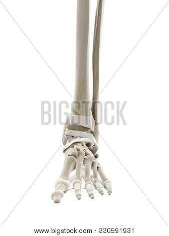 3d rendered medically accurate illustration of the ligaments of the foot