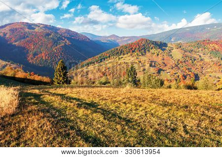 Sunny Autumn Evening Scenery In Mountains. Forest In Fall Foliage On The Hillside. Spruce Trees Behi