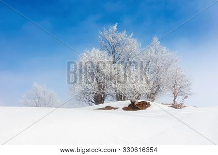 Tees In Hoarfrost On A Snow Covered Meadow. Fantastic Winter Scenery On A Misty Morning Weather With